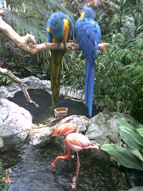 Crystal Gardens Birds